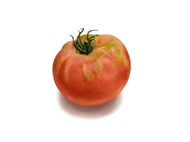 トマトを収穫しました