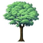 樹木を描いてみた