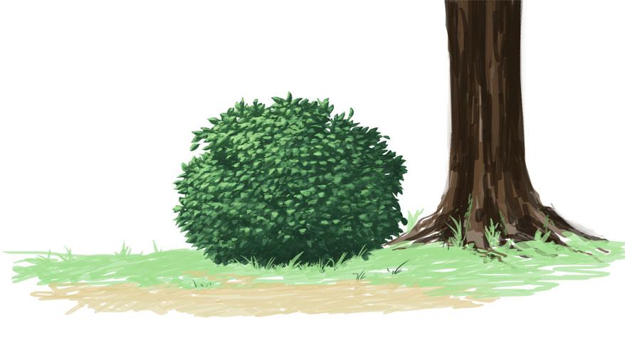 低木(近景)を描いてみた