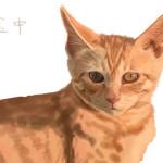 子猫の絵続き