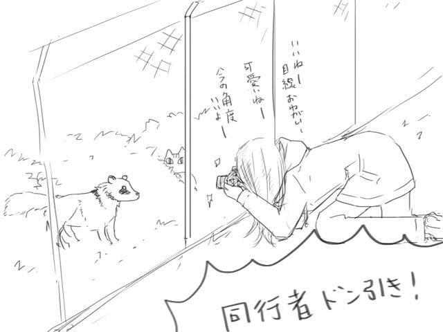 木立、タヌキとの遭遇に大興奮するの図