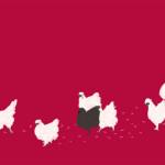 烏骨鶏の行進