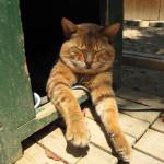 お気に入りの猫写真