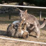 じゃれる猫さん達(写真)