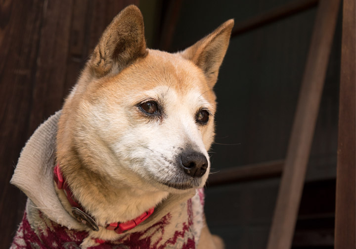 この春の犬さん(写真)