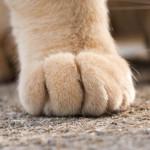 猫の手(写真)