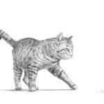 野良猫の行進