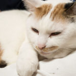 友人の膝の上で心地よさそうな猫さん