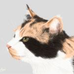 三毛猫を1時間で描いてみた