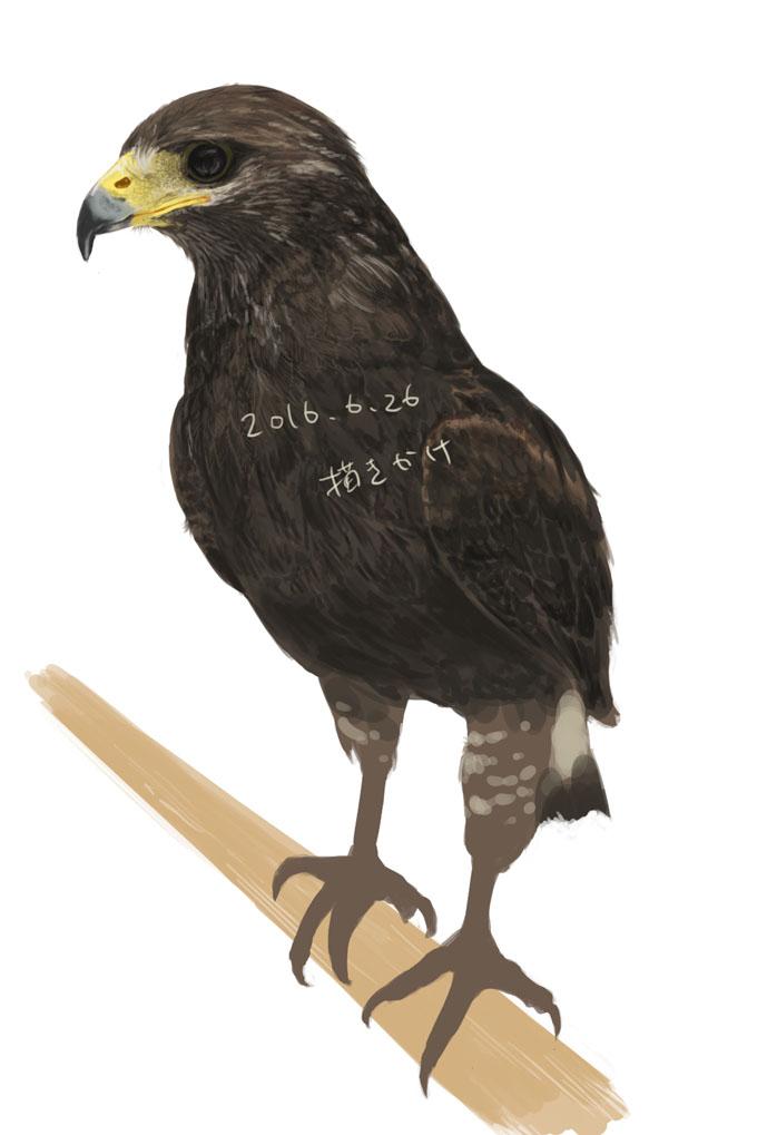 鷹描きかけ2