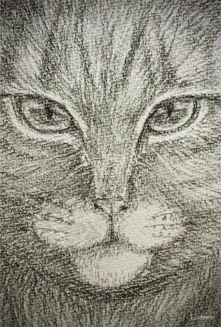 木炭でねこさん描いてみた