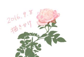 薔薇描きかけ